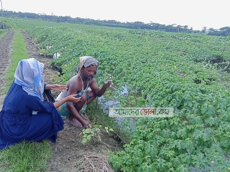 চরফ্যাশনে সবজি চাষ করে স্বাবলন্বী কৃষক নান্টু: